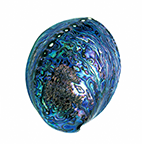 Image of paua