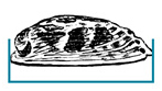 Measure flat face of paua in a straight line, not over the curve of the shell.