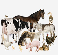 Group of farm animals for welfare consultation