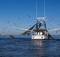 shrimp boat with seagulls