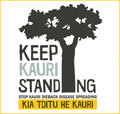 The campaign to save our kauri forests