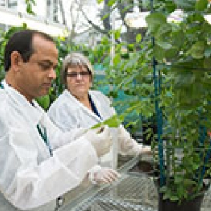 Plants being checked by scientists in PEQ glasshouse