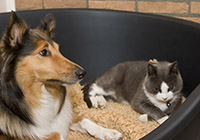 dog and cat in basket