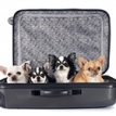 dogs sitting in a suitcase