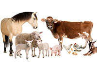 farm animals in group