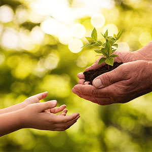A child's hands, reaching out to an adult's hands holding a tree seedling.
