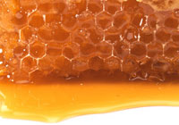 honeycomb sitting in pool of honey