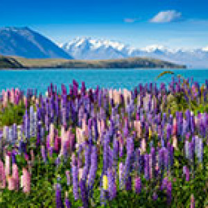 lake tekapo mountains lupins 200 140