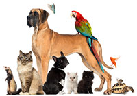 dogs, cats, birds, ferret and turtle