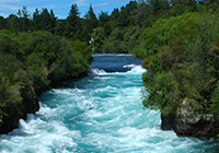 waikato river in flow between two forest banks